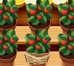 Mia Strawberry Garden